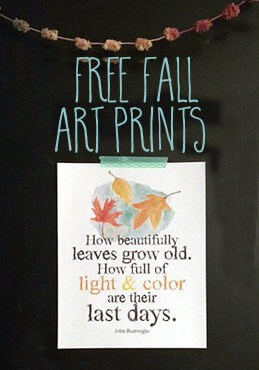 free fall art prints from Greco Design about changing leaves