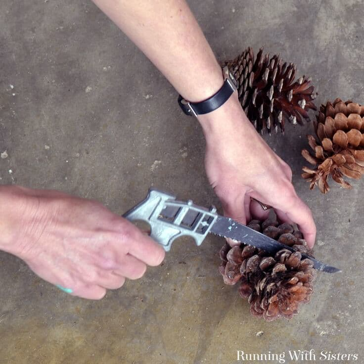 Cutting pinecones in half with rose pruners