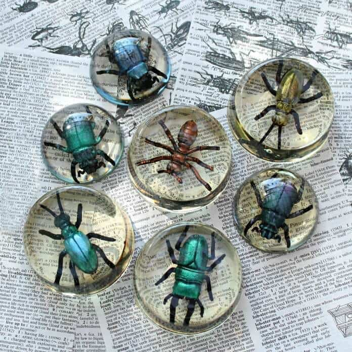 Faux Bugs in Resin