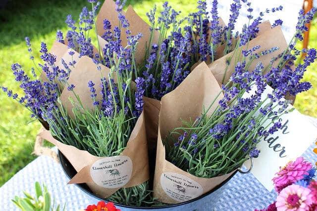cloverhill-flowers-lavender