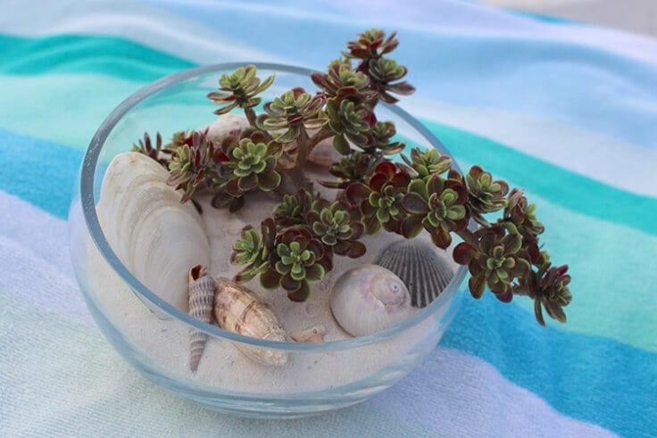 10-beach-terrarium-souvenior