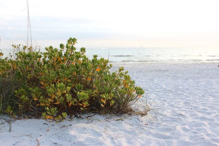 beach-brush