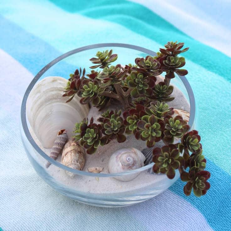 Faux Succulent Beach Terrarium