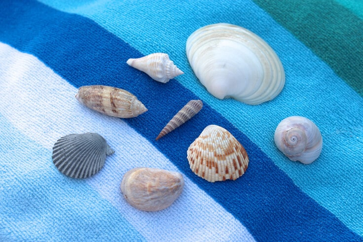 beach-terrarium-shells