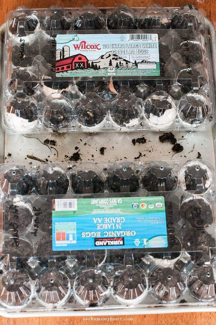 winter egg carton greenhouse how to start your garden seeds with