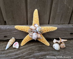 Make a Shell Embellished Starfish! This beach chic accent is easy to make. Watch our video tutorial to see how we did it!