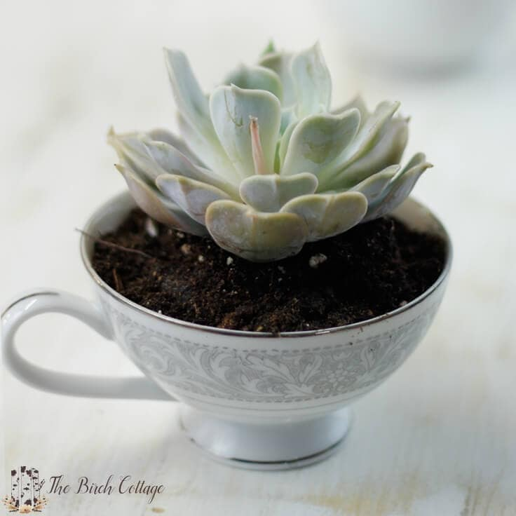 Succulent Planter from Repurposed China