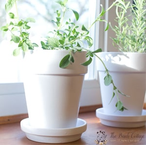 Learn how to paint terra cotta pots with this easy tutorial from The Birch Cottage for Kenarry: Ideas for the Home
