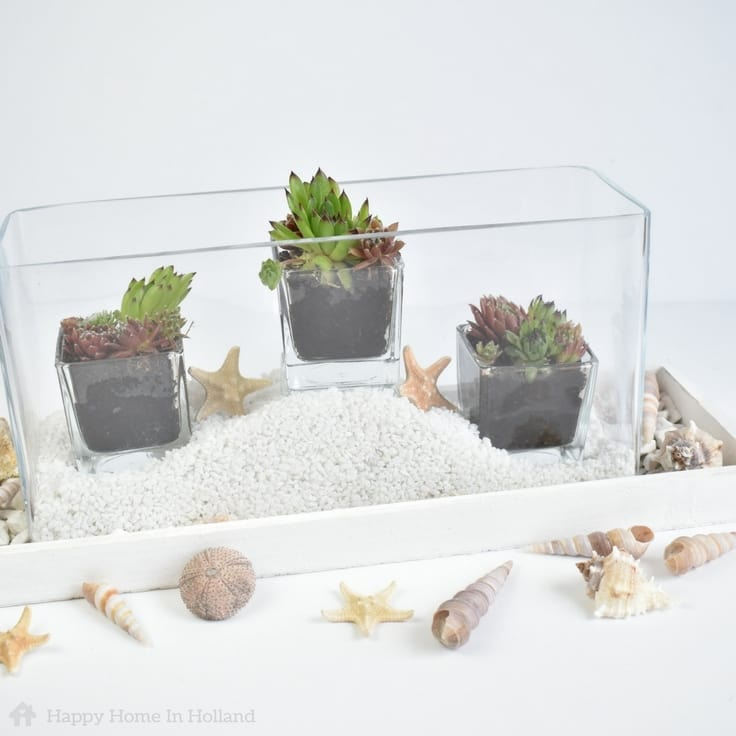 DIY Succulent Plant Display: Stylish Coastal Decor Idea