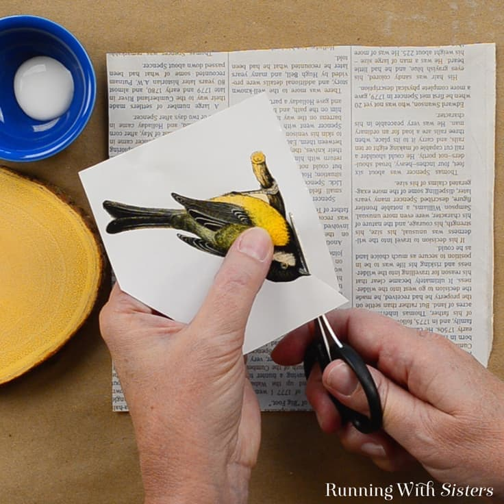 Learn how to do image transfer using Mod Podge. We'll show you how to make Image Transfer Bird Coasters from start to finish. This is a great gift craft!