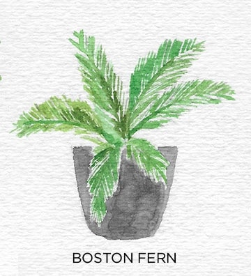 A Guide to Caring for Easy to Grow Indoor Plants including Boston Fern