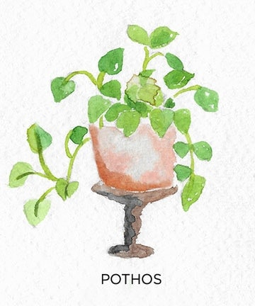 A Guide to Caring for Easy to Grow Indoor Plants including Pothos