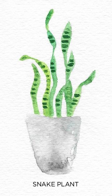 A Guide to Caring for Easy to Grow Indoor Plants including Snake Plant