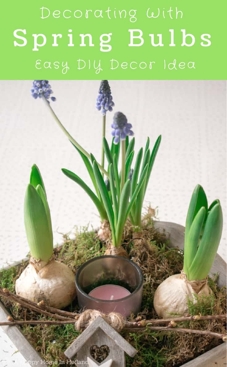 Learn how to make a simple and stylish spring bulb arrangement using hyacinths and blue muscari bulbs