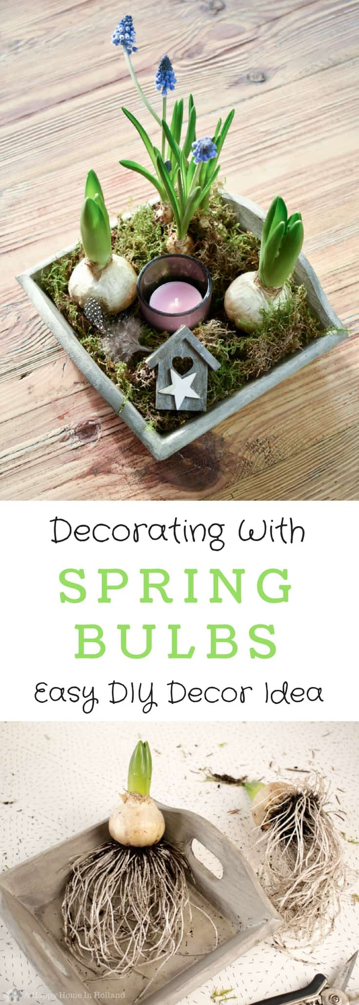 Decorating With Spring Bulbs: Simple Hyacinth & Muscari Display Idea