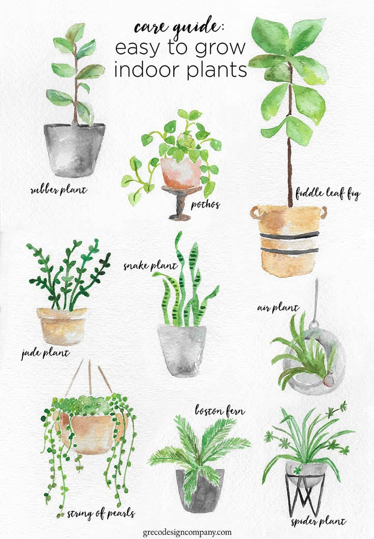 A guide to caring for easy to grow indoor plants for Easy to take care of indoor plants