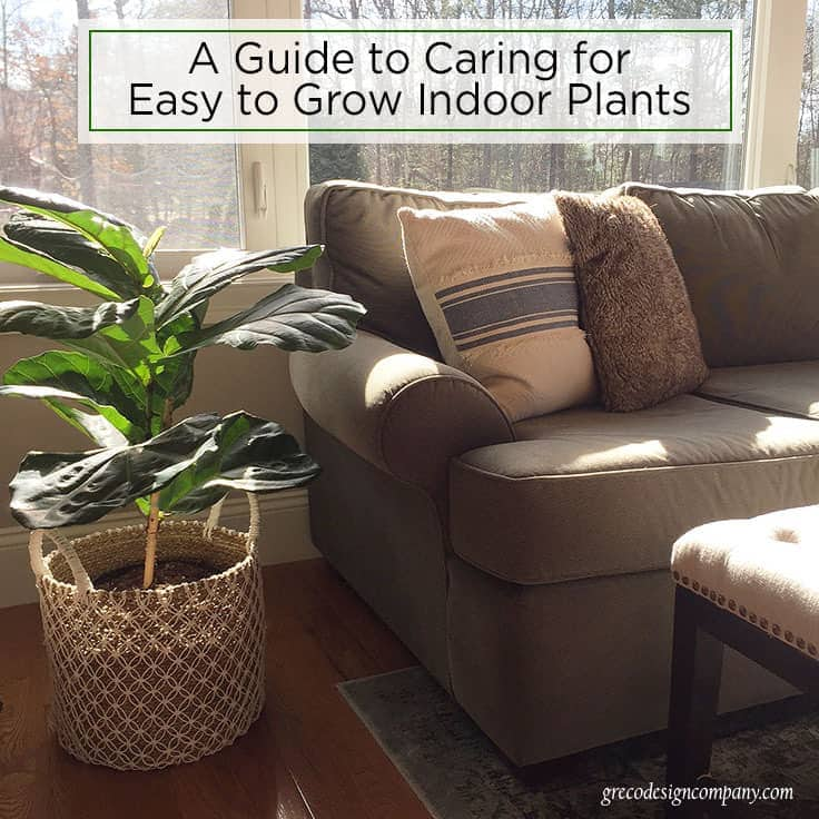 A guide to caring for easy to grow indoor plants for Easiest indoor plants to grow