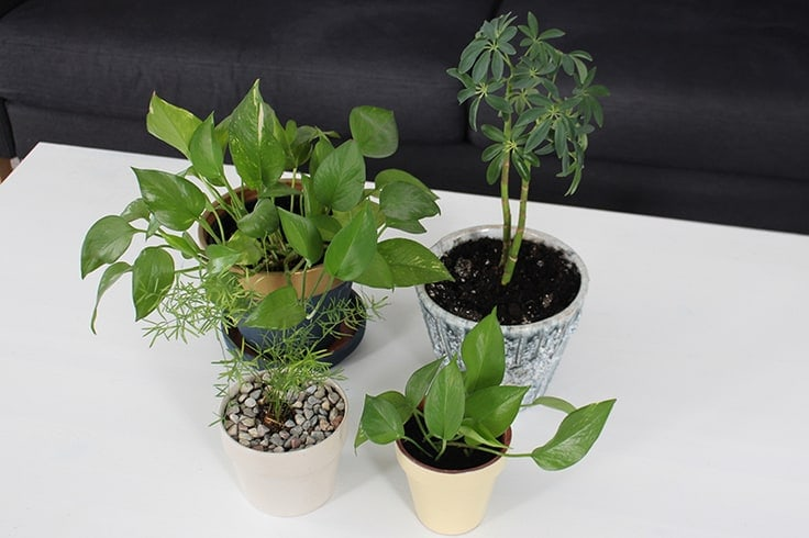 How to care for houseplants. Use these tips to spring clean your indoor plants.