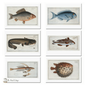 Vintage Fish Illustration Note Cards by The Birch Cottage