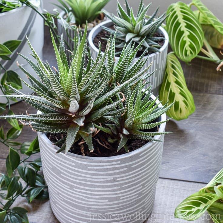DIY Modern Indoor Plant Pots With Paint Pens
