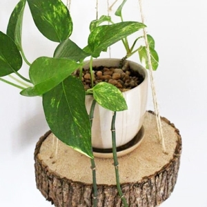diy hanging planter with wood slice
