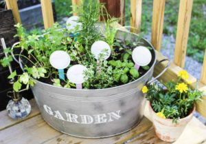 Herb garden in galvanized bucket