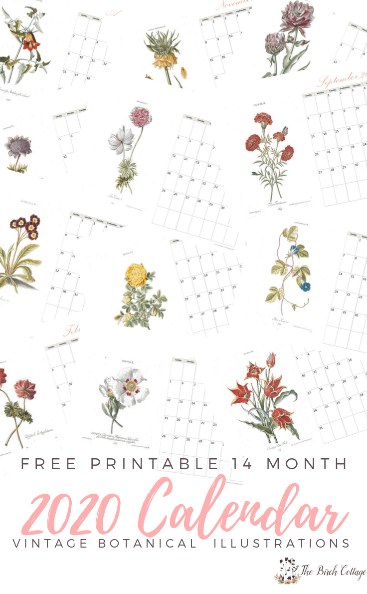 Free Printable 14 month 2020 Calendar with Vintage Botanical Illustration from The Birch Cottage