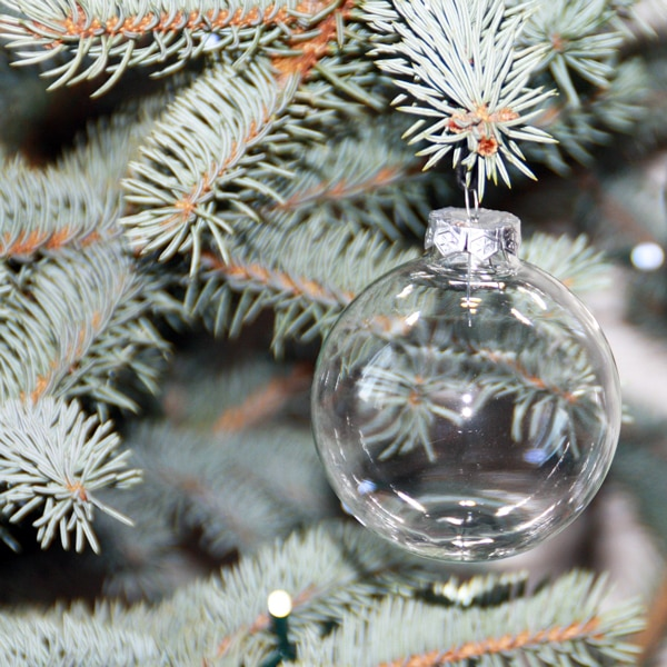 empty clear plastic ornament on a pine tree