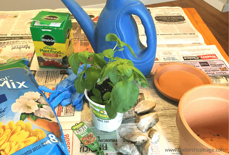 A sweet basil plant, watering pitcher, plant food, and soil mix