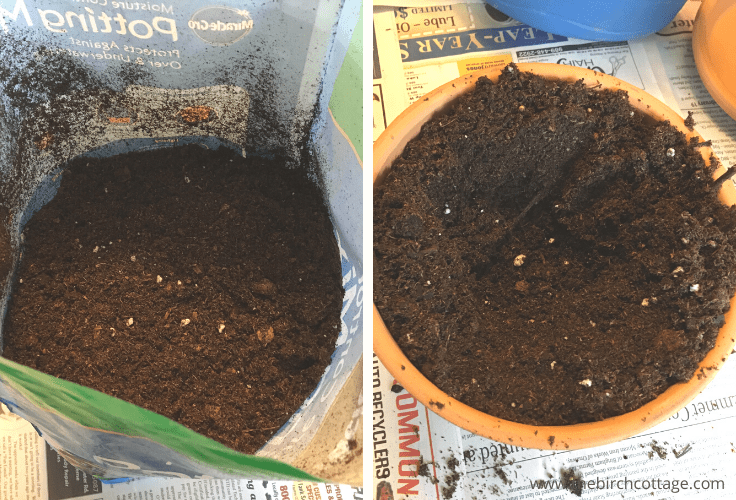 Potting mix in a bag and in a flower pot