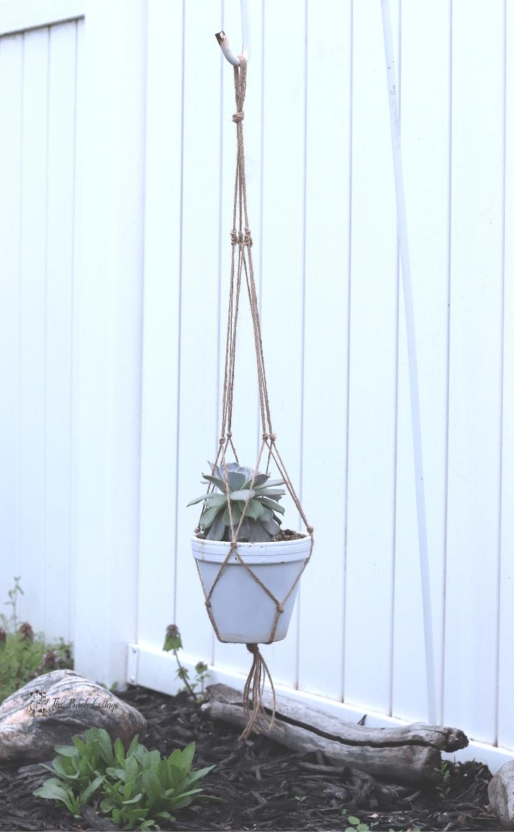 succulent in macrame plant hanger