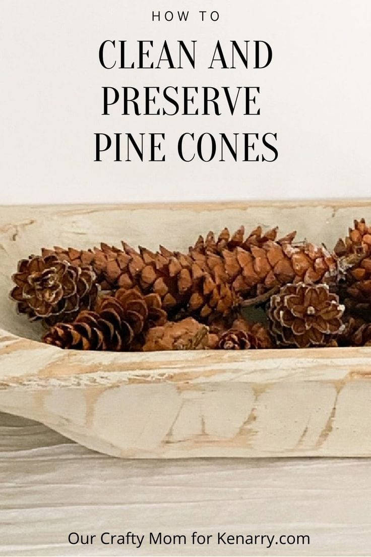 preserved pine cones in dough bowl
