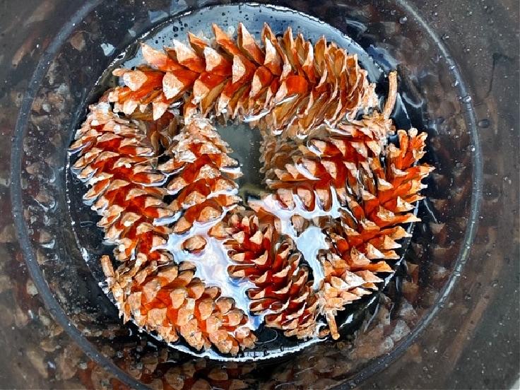 soaking pine cones