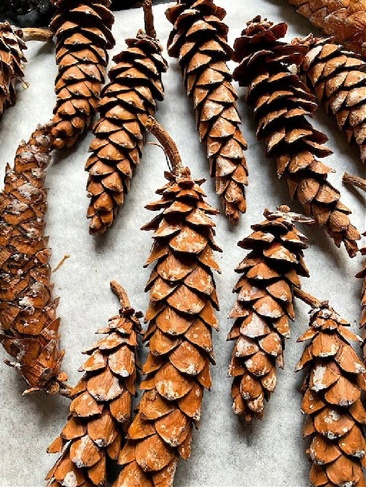 pine cones on baking sheet