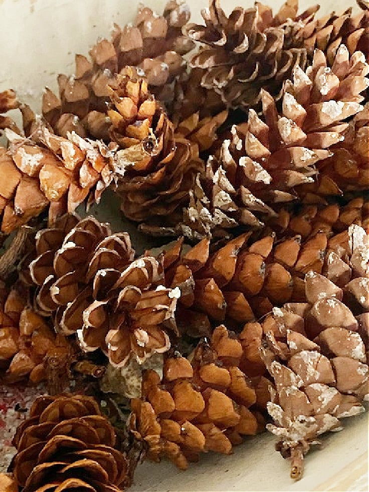 preserved pine cones