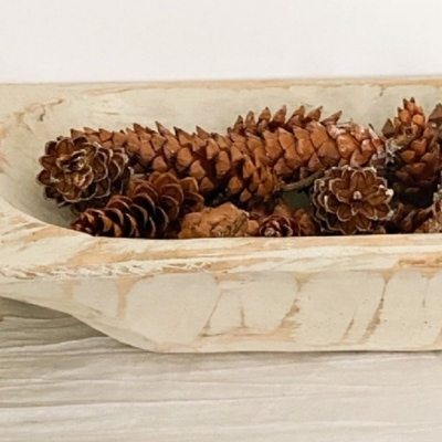 pine cone feature image