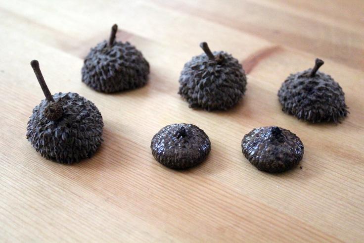 6 acorn caps in 2 species sitting on a countertop