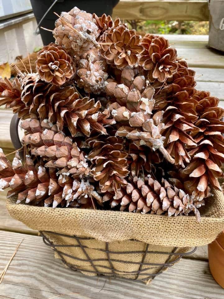 pine cones in basket
