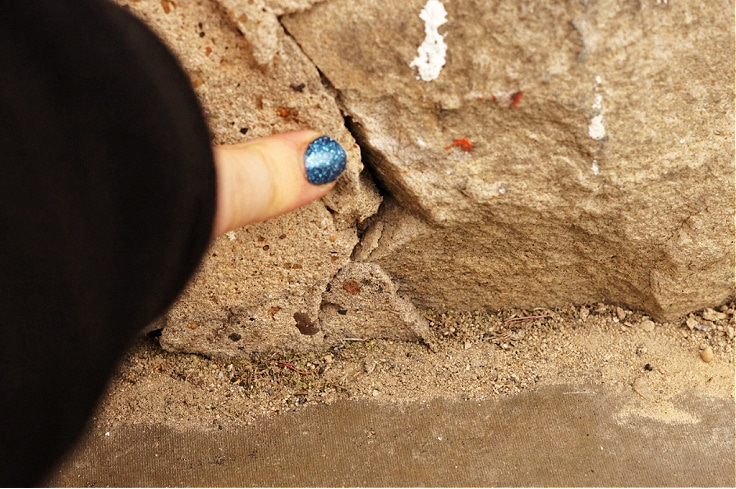 Pointing to a crack in the rocks where you will place the ant spray.