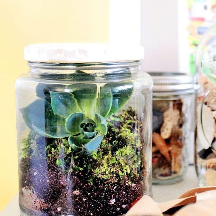 Mason jar terrariums full of dirt and plants.